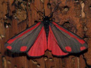 insetti alloctoni